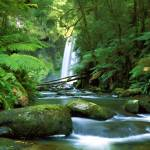 """""""Hopetoun Falls Aire River"""" by rdwittle"""