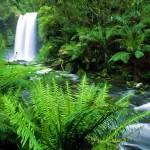 """Hopetoun Falls"" by rdwittle"