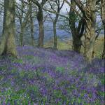 """blubells nr machynlleth, mid wales"" by eyeontheworld"