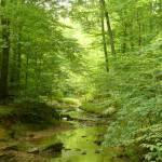 """Forest Stream"" by JonathanKarnofsky"