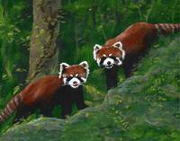 Firecats Red Pandas