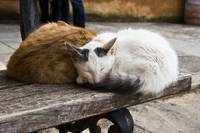 Sleeping Monastery Cats
