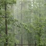 """""""Monsoon Season"""" by rayjacque"""
