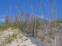 Sea Oats and Fence