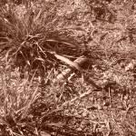 """""""Scrub Grass"""" by MichaelClydeEllis"""
