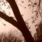 """Nature in Sepia"" by MichaelClydeEllis"