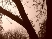Nature in Sepia