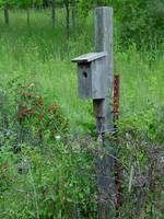 Bird House in berries