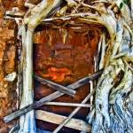 """Strangler Ficus Root Surrounding Door"" by johncorney"