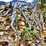 """Strangler Ficus Root La Aduana"" by johncorney"