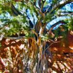 """Strangler Ficus Roots in Adobe Wall"" by johncorney"