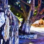 """Ficus Tree La Aduana"" by johncorney"