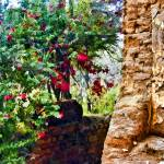 """""""Old Adobe Wall with Bouganvillea"""" by johncorney"""