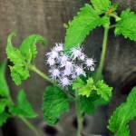"""""""Wild Flower"""" by RTMacGowan"""