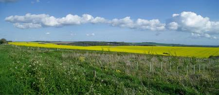 Rape Seed Fields Panorama