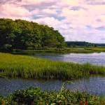 """""""Irish Marsh"""" by ginacormier"""