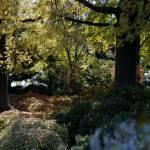 """""""autumn garden"""" by fjsjr"""