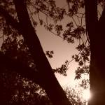 """Trees & Leaves in Sepia"" by MichaelClydeEllis"