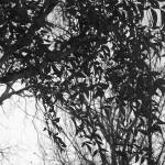 """Branches & Leaves"" by MichaelClydeEllis"