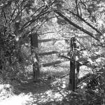 """Secret Path"" by jessejames2009"