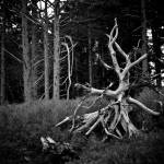 """Twisted Birch"" by labutle"