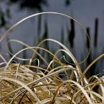 """Curly Grass"" by labutle"