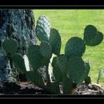 """Big Cactus"" by SherryHolderHunt"