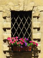Italian window box with pink flowers