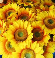 A Cheerful bunch of Sunflower