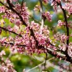 """Pink Spring"" by JSHollands"