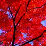"""""""Autumn Ablaze"""" by enchantart"""