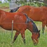 """2 horses"" by lwoodburn"