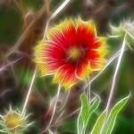 """Fractalius Gaillardia"" by gluciano80"