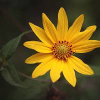 """Naked Sunflower"" by JoAnn McCleeary"