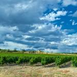 """Storm Over Vines"" by ImageArt-Photography"