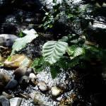 """""""Spring Leaves"""" by VictoriaLarsen"""