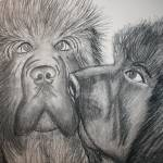 """newfoundland dogs"" by artista"