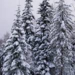 """""""Winter Snow Scene"""" by VictoriaLarsen"""