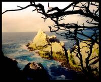 Point Lobos, Big Sur, California
