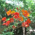 """Pride of Barbados"" by JESSECSMITHJR"