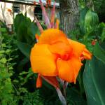 """Cannas"" by JESSECSMITHJR"