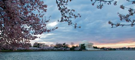 Jefferson Memorial with Cherry Blossoms and Sunset