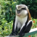 """""""Mona Monkey"""" by InspiringImages"""