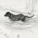 """Labrador in a Vermont Pond"" by elenafisch"