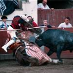 """Bull roll over (not recomended larger then the sma"" by xlaburu"