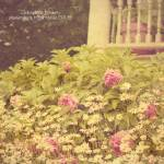 """....Flower garden..."" by PetersenPhography"