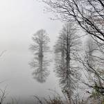 """""""reflections in the fog"""" by scottMacKayphotography"""