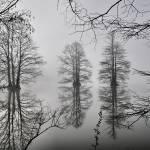 """""""fog stumpy lake"""" by scottMacKayphotography"""