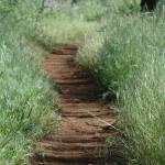 """""""Path"""" by VelvetVox"""