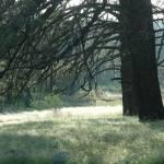 """Parking Lot Meadow"" by VelvetVox"